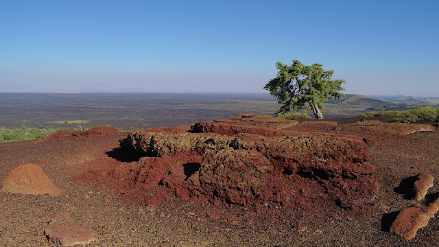 A stubborn tree grows at the top of Inferno Cone...