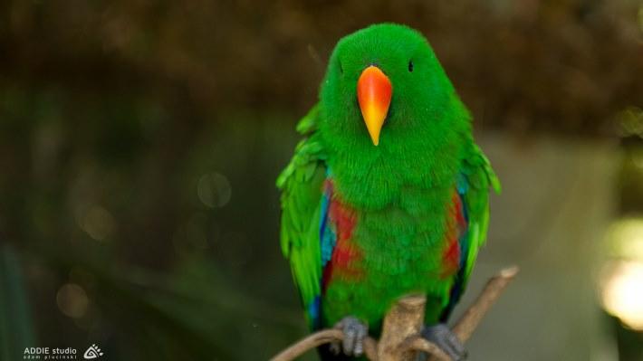 Wallpaper 2: Parrot