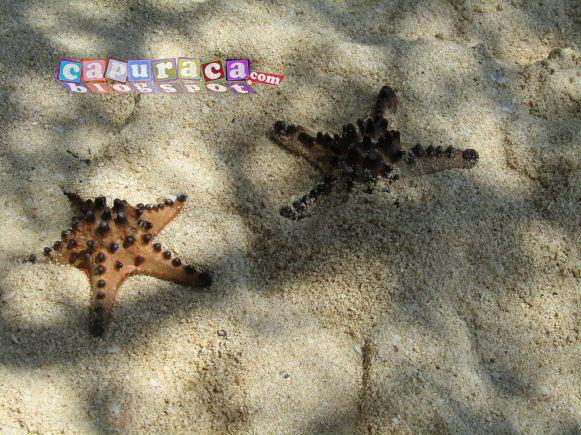 liburan ke pantai,liburan di pantai, bintang laut