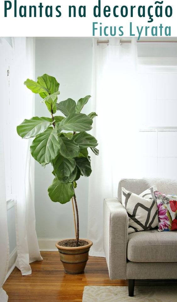 Plantas para interiores ficus lyrata jeito de casa for Tipos de plantas para decorar interiores