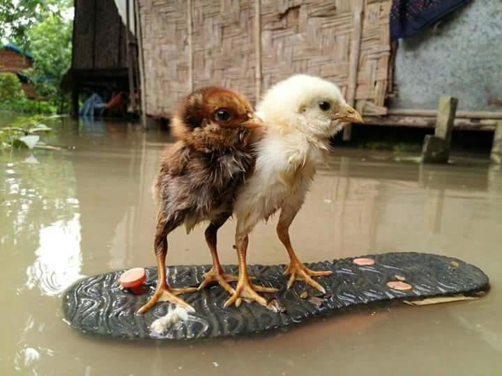 缅甸联邦的频频天灾