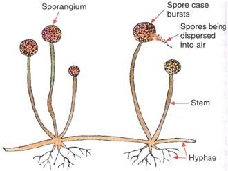 ARP6 - पौधों में अलैंगिक प्रजनन क्या है और यह किन विधियों से होता है