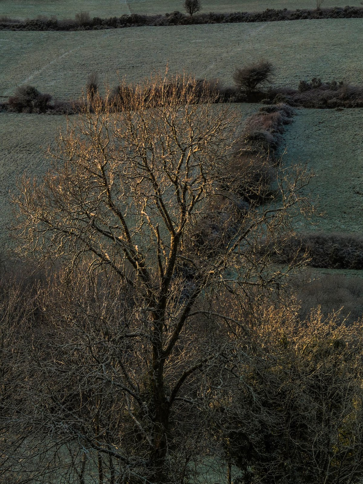 Sun shining on a bare ash tree in a valley in North County Cork.