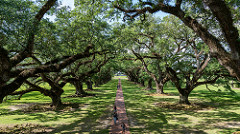Oak Alley along the Mississippi River outside New Orleans, Louisiana