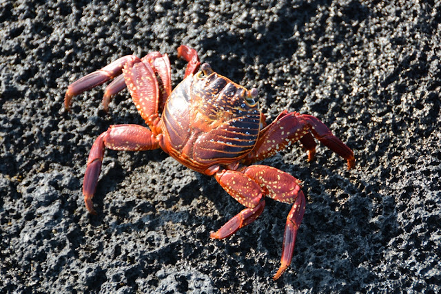 Espinoza Point crab