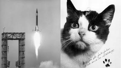 1963 rocket launch with cat Félicette