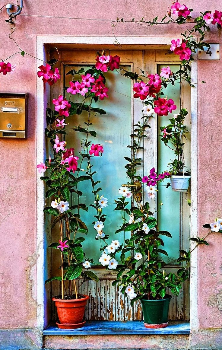 Pink flowers and door in Caorle, Veneto, Italy