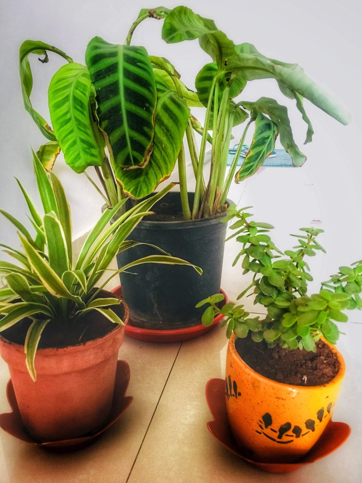 There Are Significant Benefits Of Indoor Plants Lets Talk About