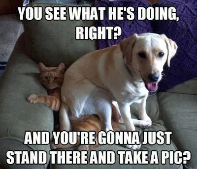 Funny Dog Humor : Sitting on the cat