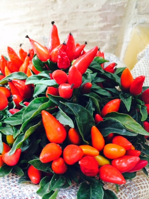 A Bouquet Of Chili Peppers Stephie S Kitchen