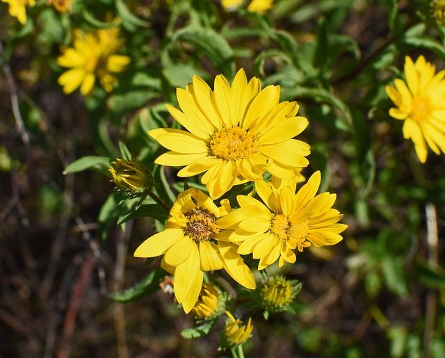 hoa da quy dep nhat