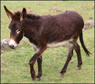 Suatu hari keledai milik  seorang petani jatuh ke dalam sumur Kabar Terbaru- Pelajaran Sang Keledai