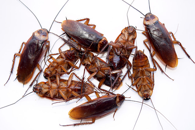 bigstock-Group-dead-cockroach-isolate-o-98250377.jpg