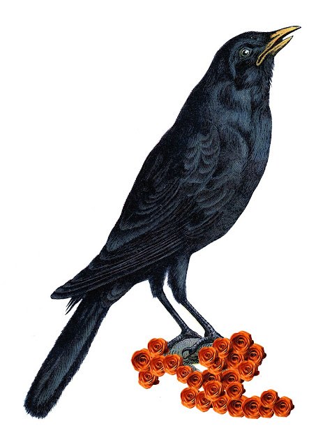 Vintage Halloween Crow Clip Art
