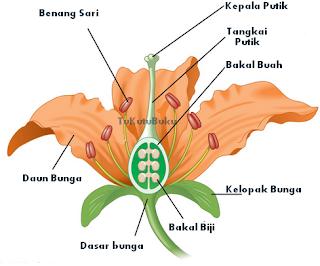 Laporan morfologi tumbuhan laporan morfologi tumbuhan diagram bunga tangkai bunga pedicellus merupakan bagian bunga yang memiliki sifat batang yang jelas umumnya berwarna hijau dasar bunga receptaculum merupakan ujung ccuart Image collections