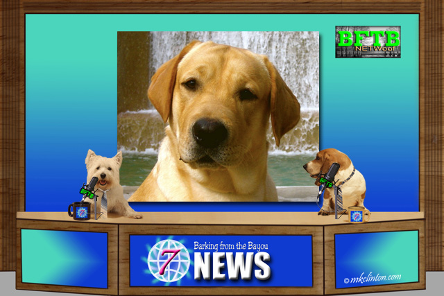 BFTB NETWoof News reports of Lab running off a bluff.