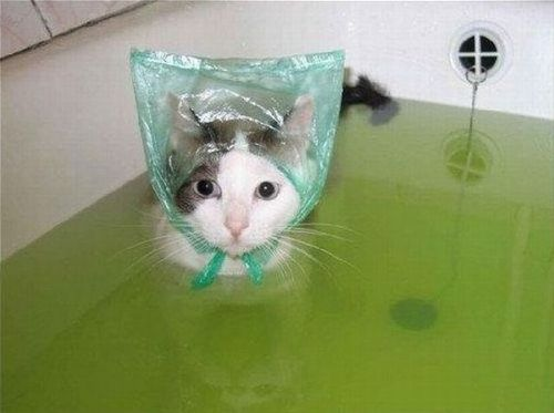 cat in the bathtub