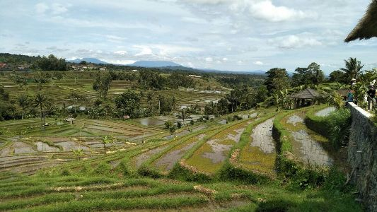 Warisan Budaya Dunia Unesco Jatiluwih