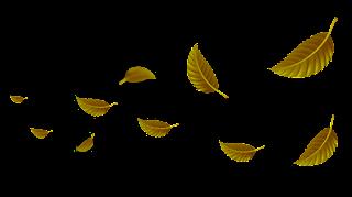 Daun icon PNG