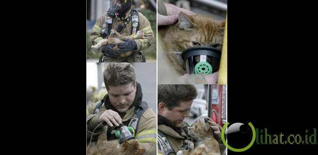 Pemadam Kebakaran Selamatkan Kucing