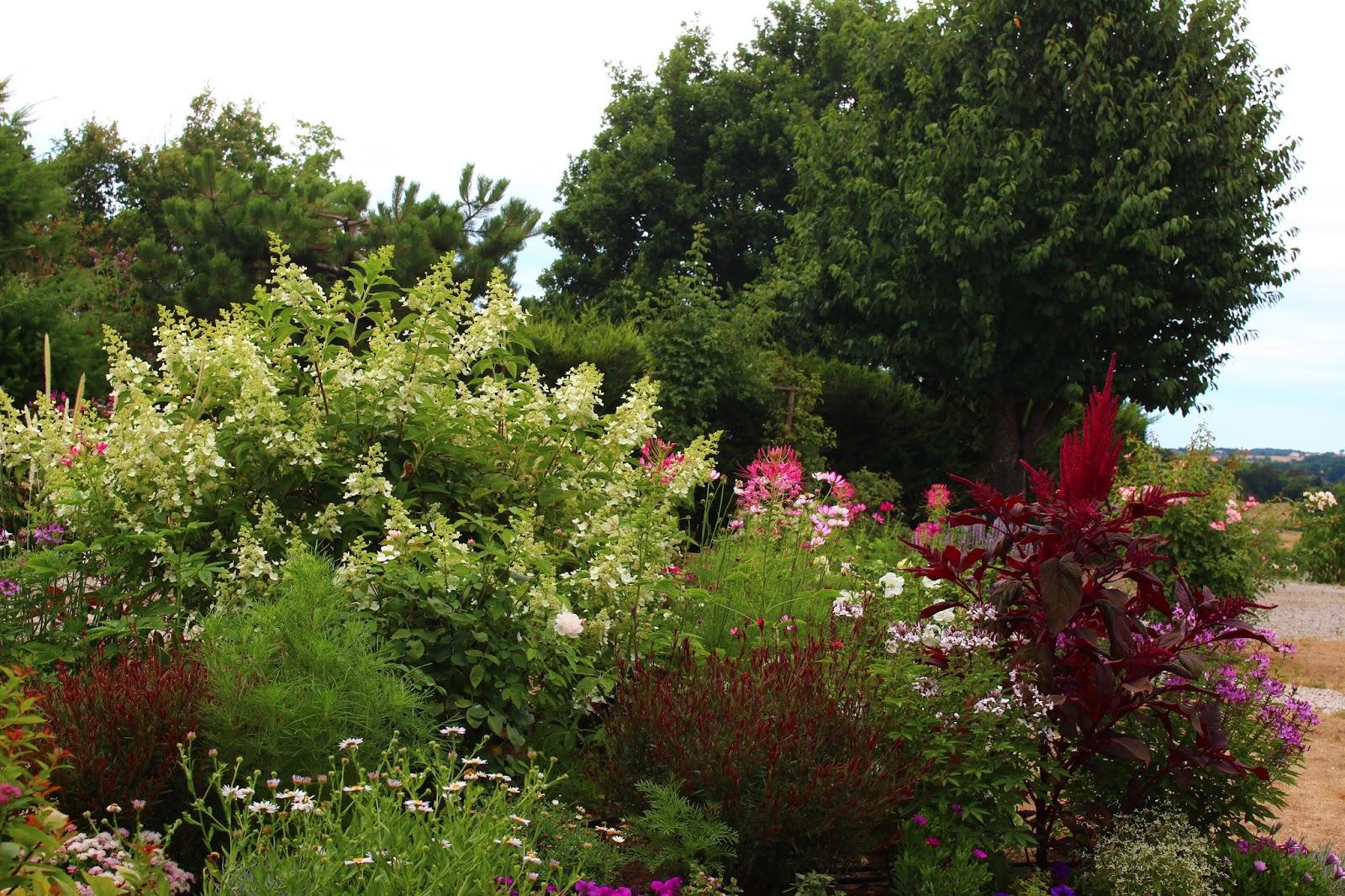 Roses Du Jardin Cheneland Hydrangea Paniculata Dans Son Decor