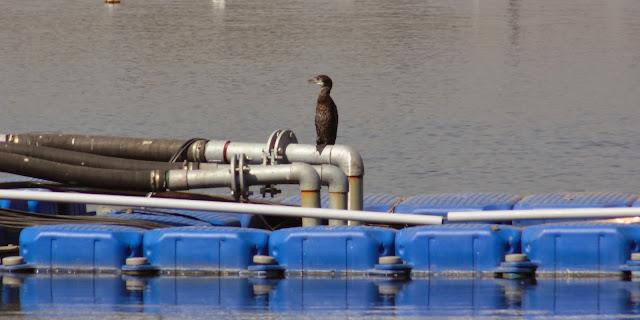 Katraj Lake - a unfamiliar Lake for bird watching