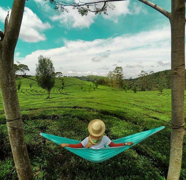 Wisata Bandung Barat Kebun Teh Sukawana, Parongpong