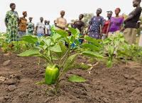 Tujuan, Prinsip dan Tahapan Pemberdayaan Masyarakat