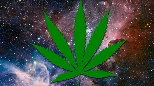 """NASA: La marihuana es una """"planta alienígena"""" con el ADN siendo fuera de nuestro sistema solar"""