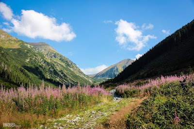 blossoming valley in the High Tatras