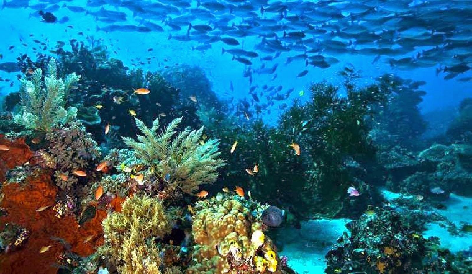 Download 95 Koleksi Gambar Ekosistem Laut Adalah Terbaru
