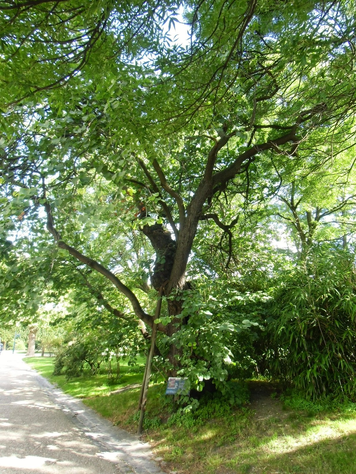 La rte le p re d 39 ulysse jardin des plantes le coin du for Plante ulysse