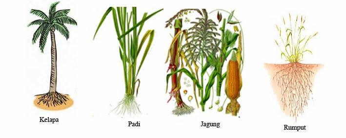 Hasil gambar untuk akar