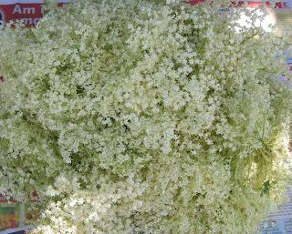 Floare de soc recoltata reteta,
