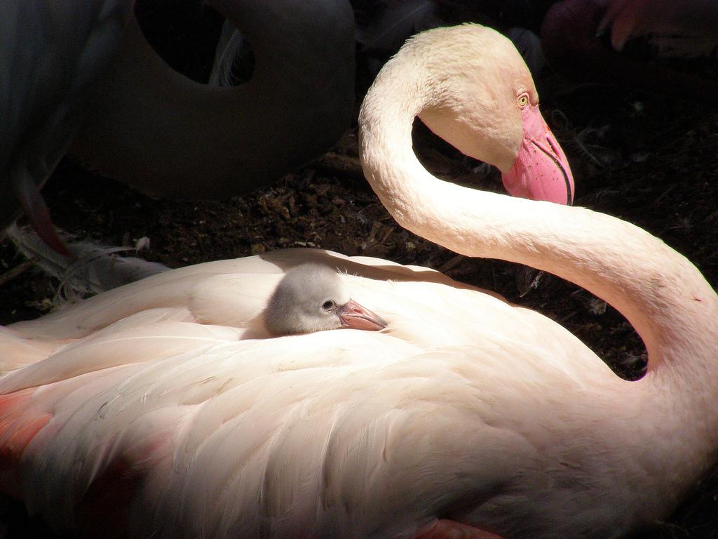 Mother S Love In Animal Kingdom
