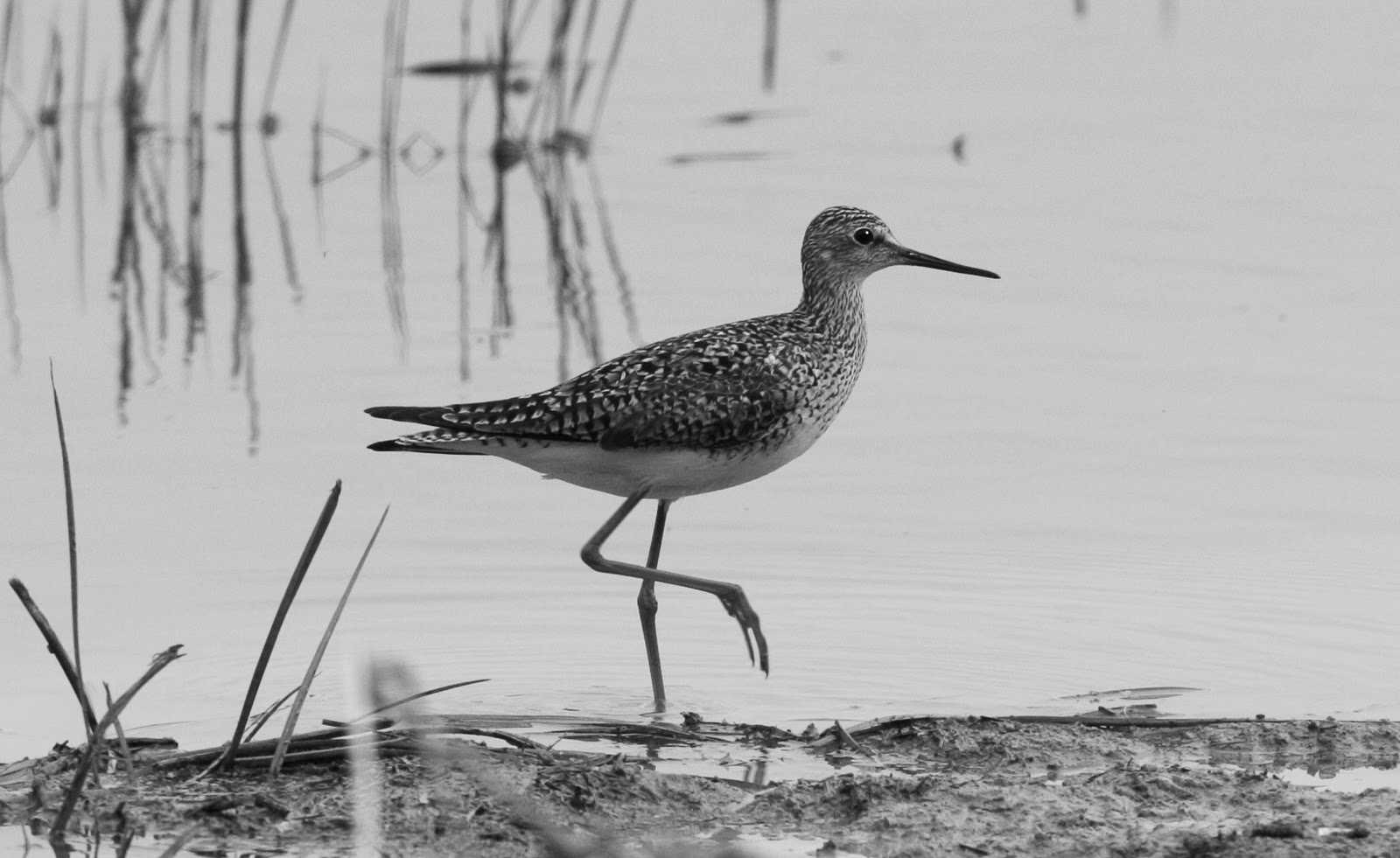 Birding with Kenn and Kimberly: August 2012