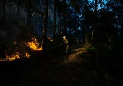 أكبر حريق غابات في تاريخها