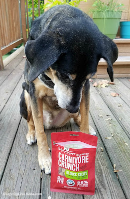 raw freeze dried dog treats senior rescue adopt