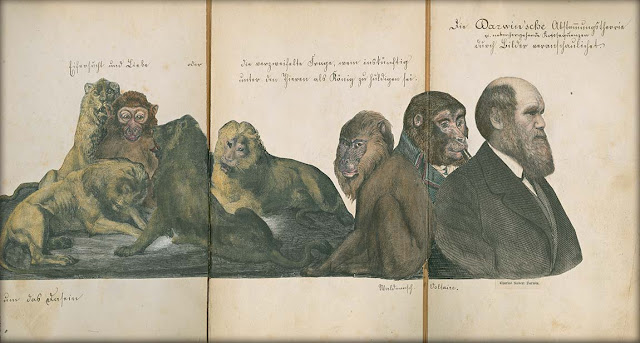 Anti-Darwinian foldout, by an anonymous German artist 1874. Illustrated By . . . marchmatron.com