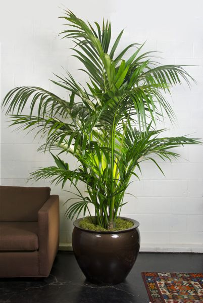 Beautiful Artificial Indoor Plants Pictures - Interior Design ...