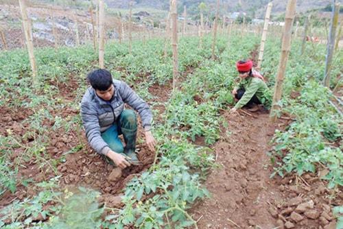 Khởi nghiệp bền vững bằng rau, củ, quả sạch
