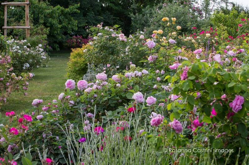 Jardin de rosas en piamonte for Cancion jardin de rosas