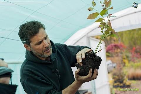 Jardines y Huertas: sugerencias para plantar plantas de arándanos