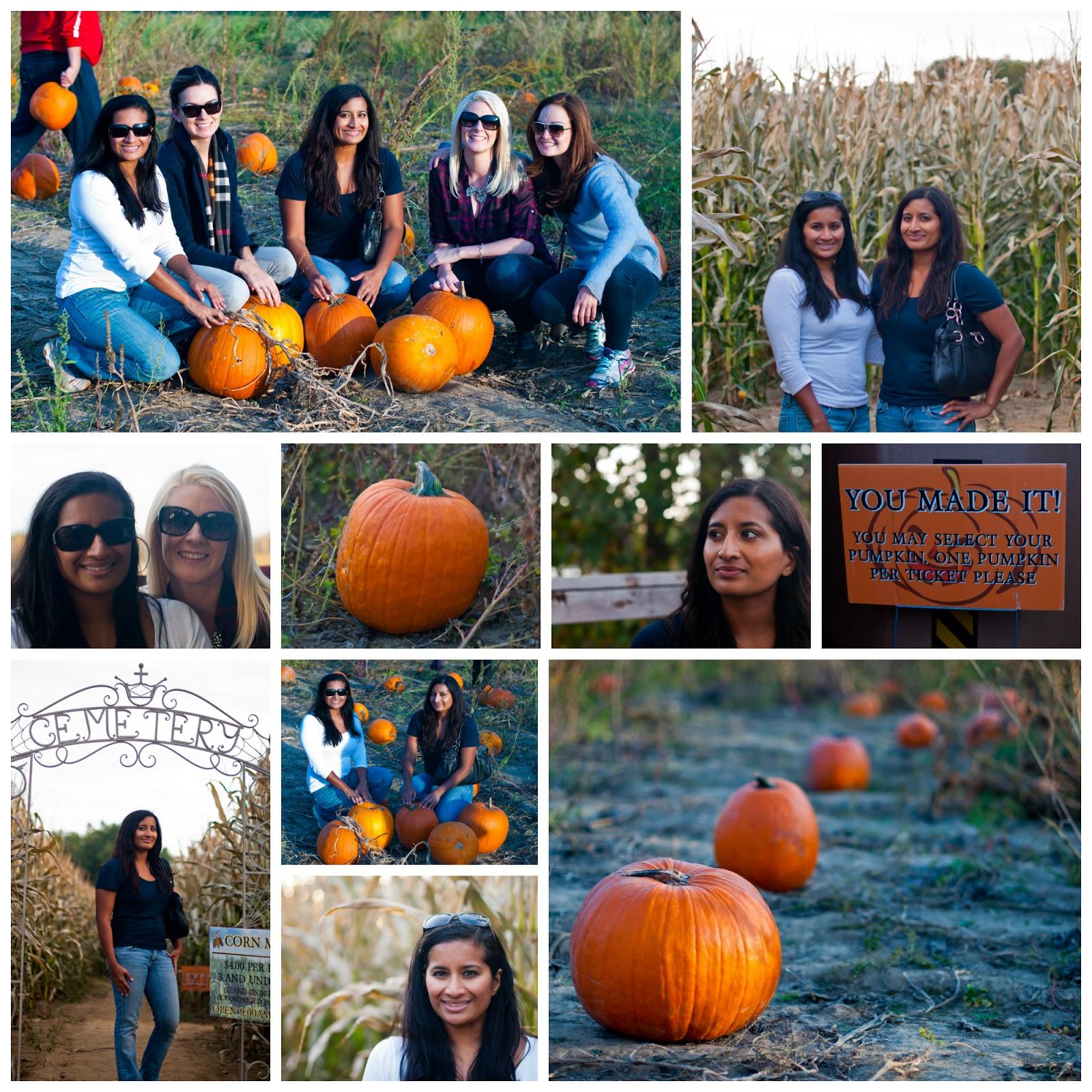 Pumpkin%2BPatch