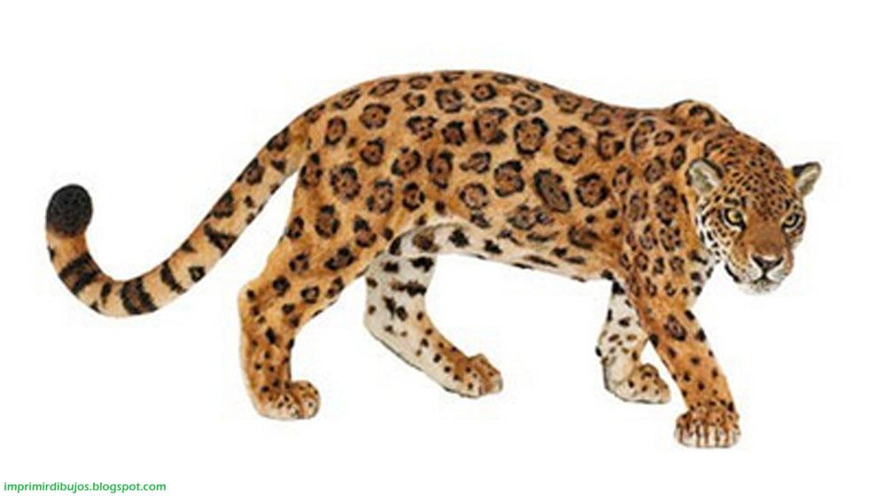 Imprimir dibujos animales de la selva para imprimir y - Jaguar dessin ...