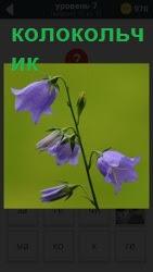 800 слов растет цветок колокольчики 7 уровень