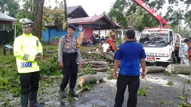 Angin Kencang Tumbangkan Pohon Dan Baliho Di Batusangkar