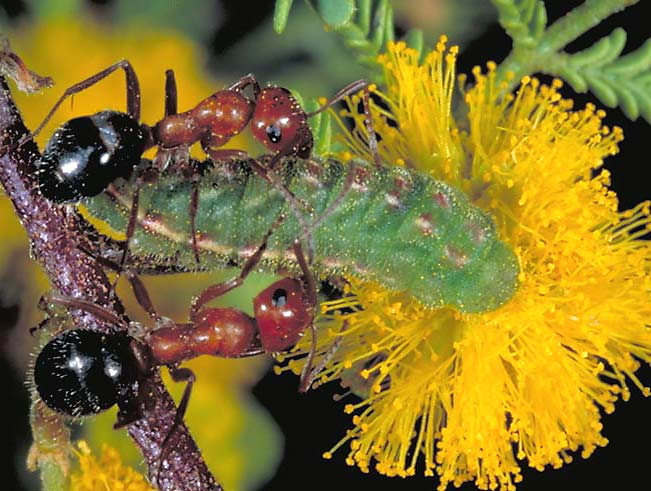 what is the symbiotic relationship between plants and animals