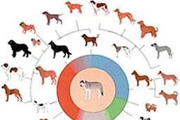 Jejak Dan Petunjuk Evolusi