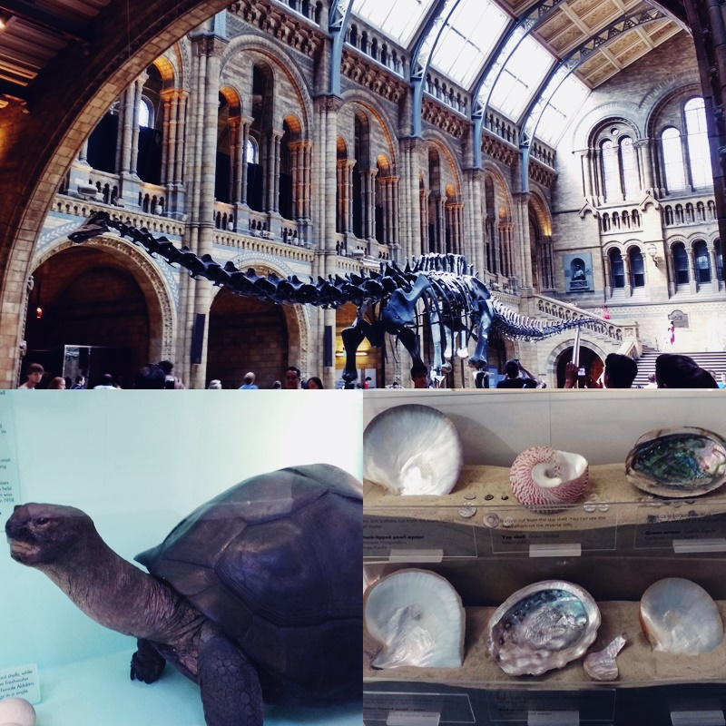 natural history museum london collage